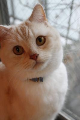 [cat]
