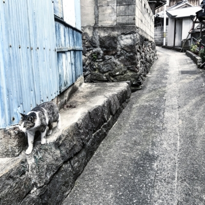 f:id:kaeru_geko:20170209181227j:image