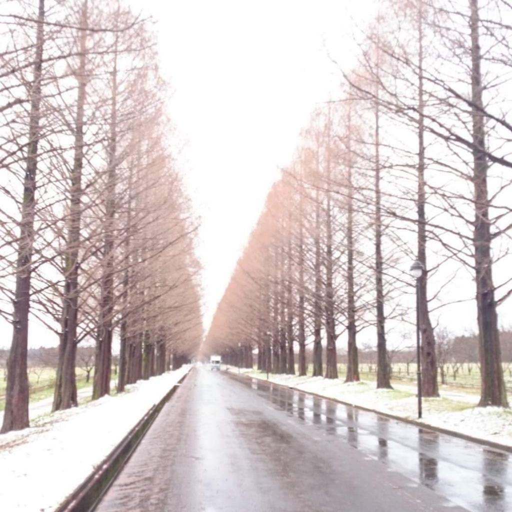 f:id:kafu-kai:20161228151459j:plain