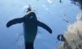 旭山動物園:とびますとびまs