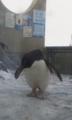 旭山動物園:どこむいてん