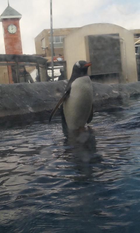 旭山動物園:ぺそ