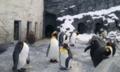 旭山動物園:ペンギンwwww