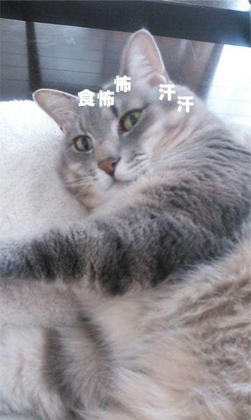 f:id:kagetora5:20190522164412j:plain