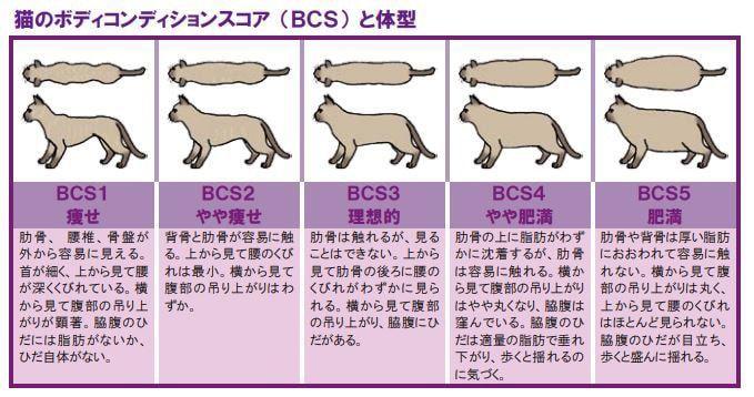 猫ボディコンディションスコア