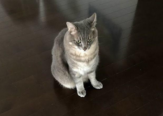 耳を澄ます猫