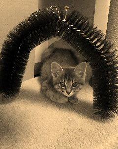 セピア色の子猫
