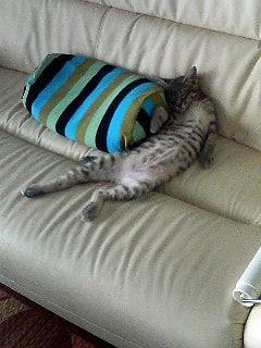 泥酔オヤジポーズの猫