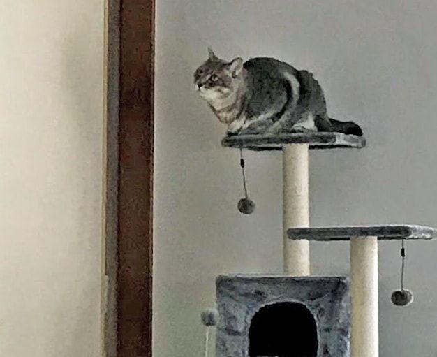 グレーのキャットタワー上にいる猫