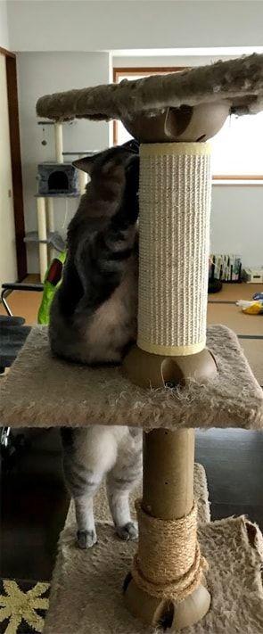 古いキャットタワーで爪をとぐ猫