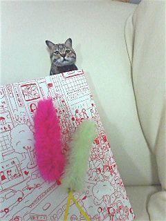 猫の写真のしおり