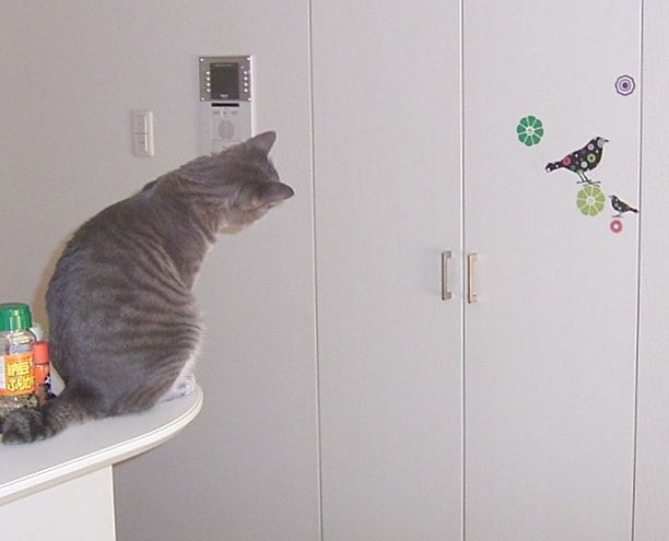 本物の鳥ではなくシールだと疑う猫