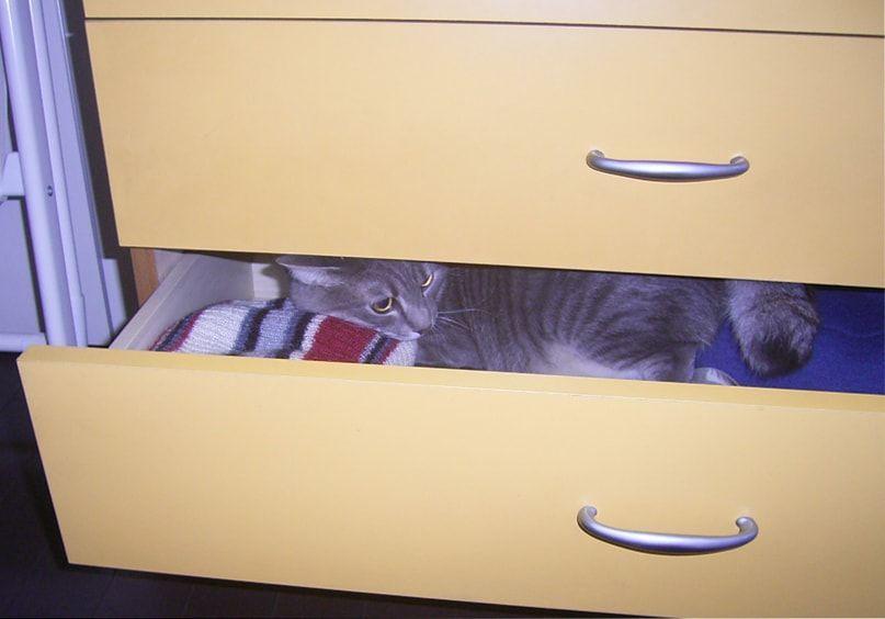 黄色い引き出しに入る猫