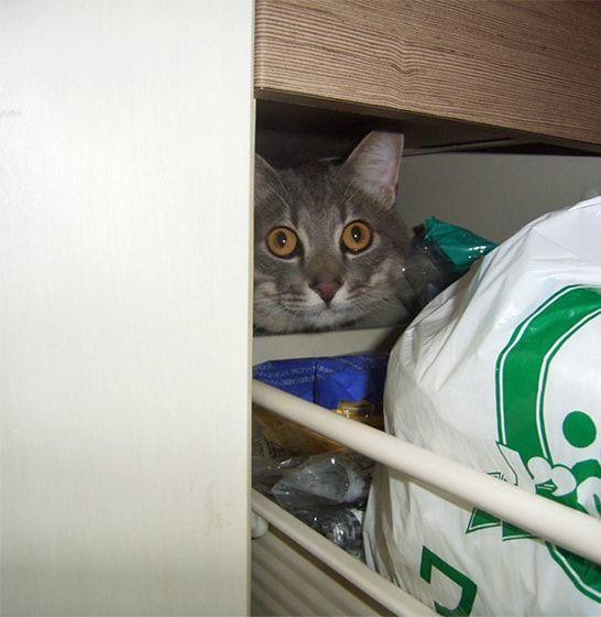キッチンの引き出しに潜る猫