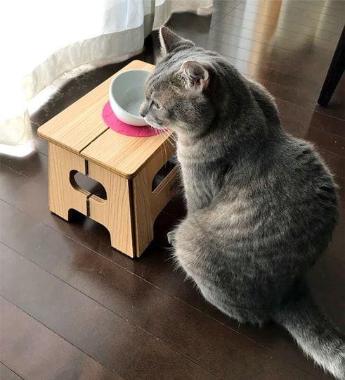 空のゴハン皿を前にする猫
