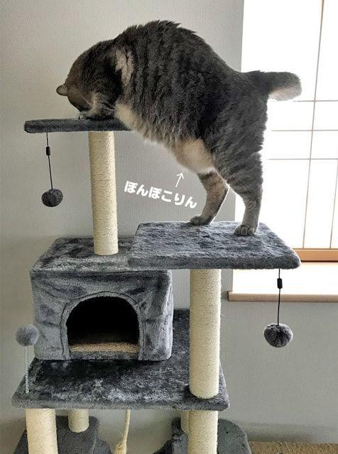 キャットタワーの上にあるカリカリを食べる猫