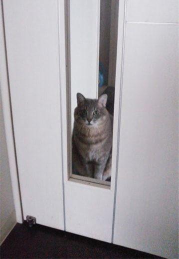 白い扉から覗くねこ-1