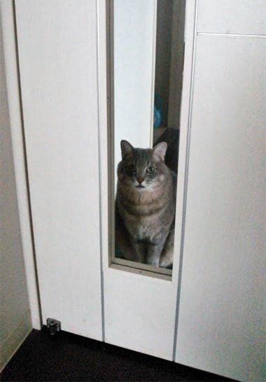 白い扉から覗くねこ-3