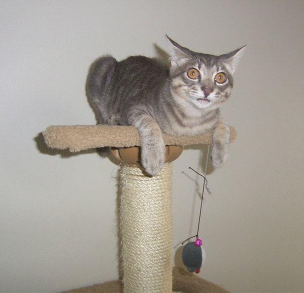 猫タワーの上から驚く猫