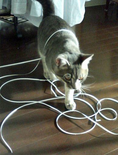 はく離紙にまみれる猫