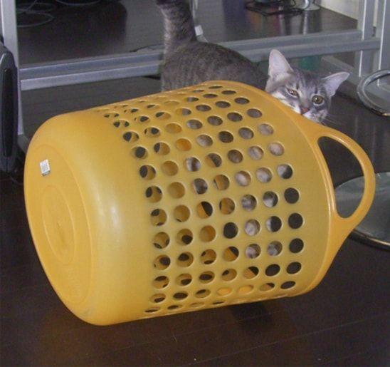 黄色いカゴの匂いをかぐ猫