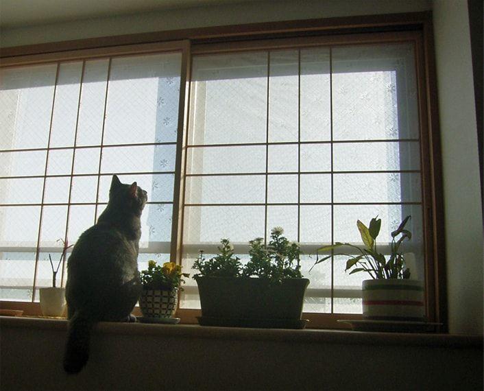 窓辺で植物と佇む猫