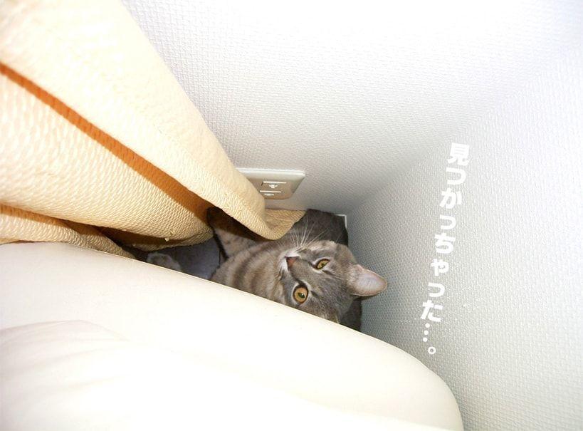 隠れ家が見つかった猫
