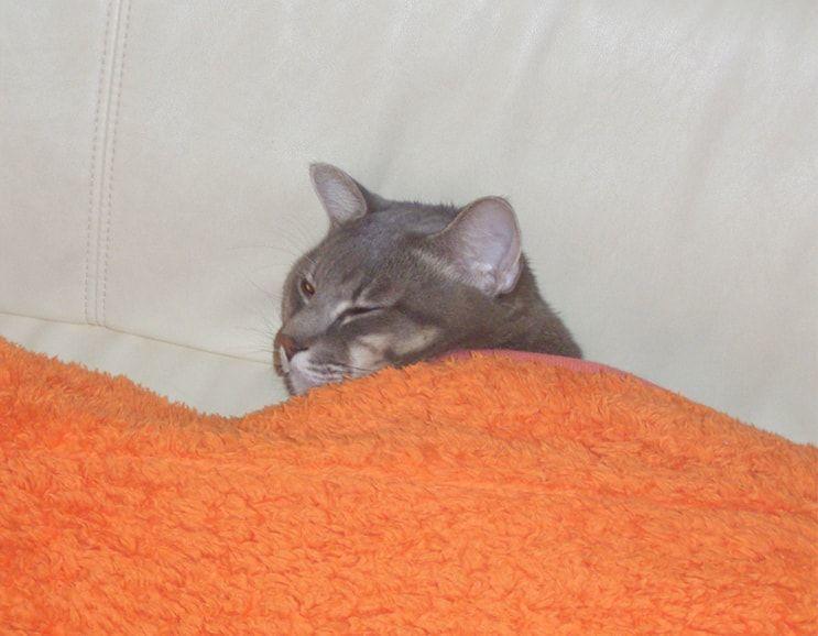 呼んだら起き出してきた猫