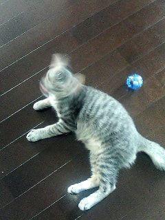 変身する瞬間のような動きをする猫