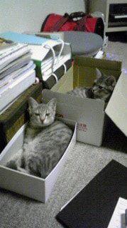 箱に入るかげとらの姉弟