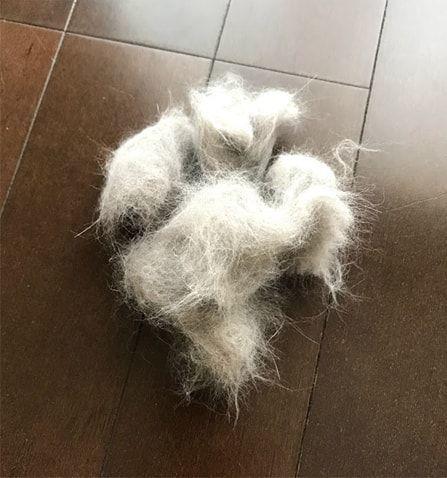 大量の猫の抜け毛
