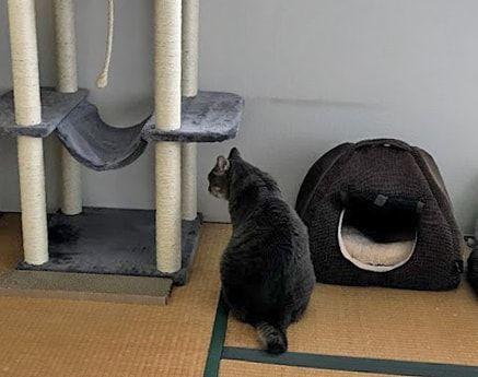うつろな顔でキャットタワーを見つめる猫