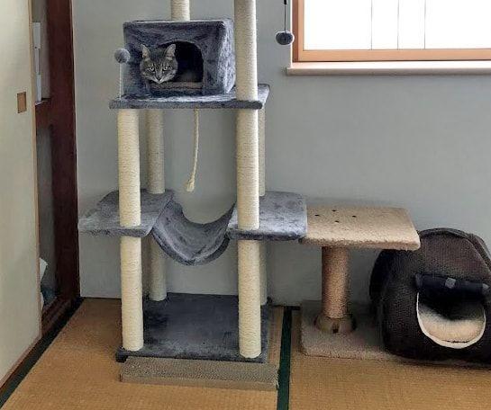 キャットタワーの中のおうちに入る猫