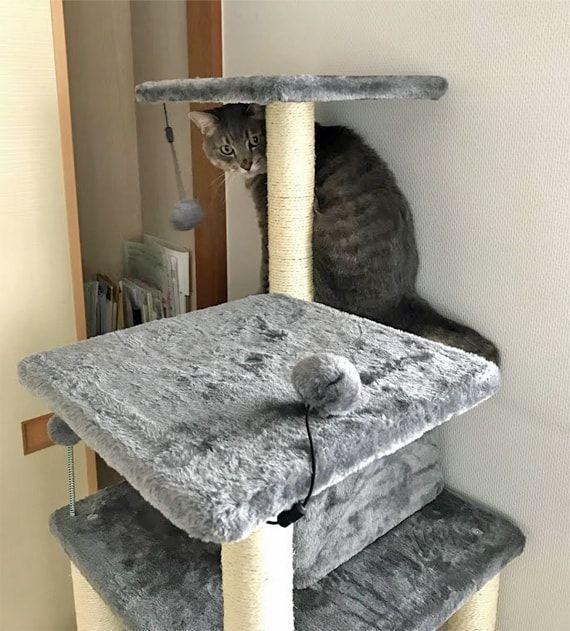 キャットタワーについている灰ポンポンを見つめる猫