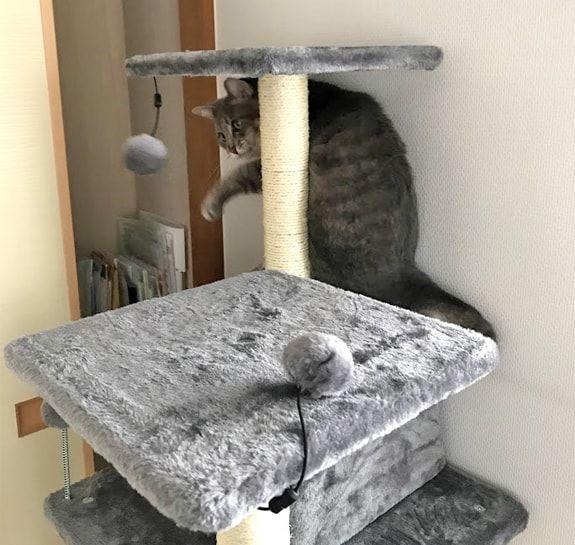 キャットタワーについている灰ポンポンをパンチする猫