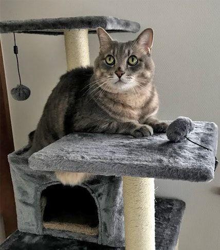 キャットタワーに疲れてひと休みする猫