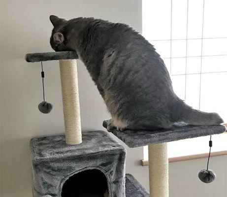 あともう少しの所で溶けそうになる猫