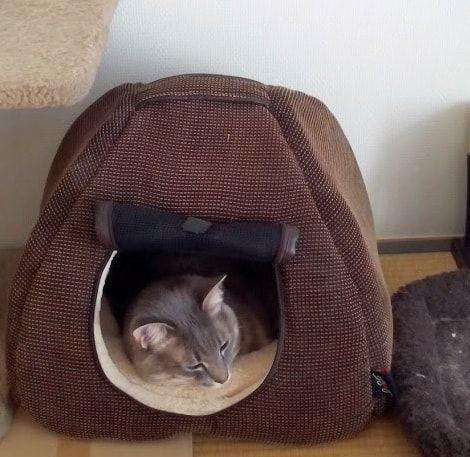 茶色いハウスで寝る猫