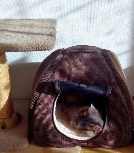 日の当たる茶色いハウスで寝る猫