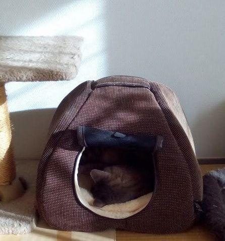 日の当たる茶色いハウスでぐっすり眠る猫