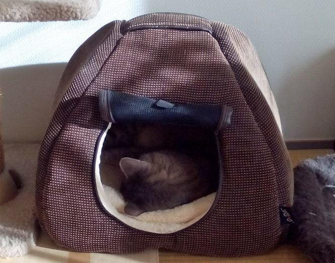 茶色いマイハウスで気持ち良く寝る猫