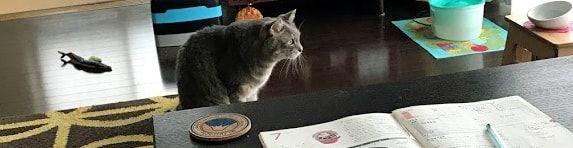 ベランダに何か見つけて狙う猫