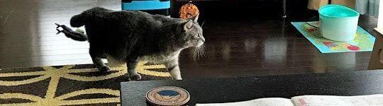 ベランダ方へ忍び寄る猫