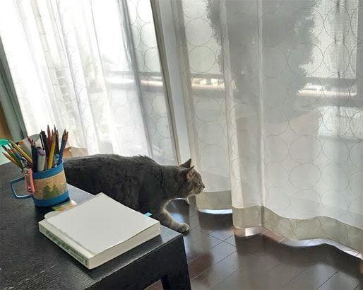 ベランダへ忍び寄り背中の毛が逆立つ猫
