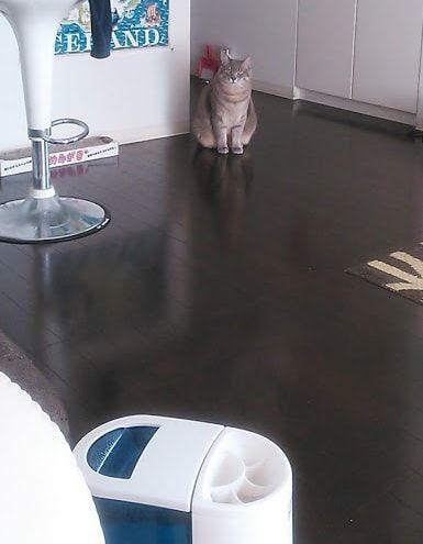 遠くのキッチンからこちらをジッと見つめる猫