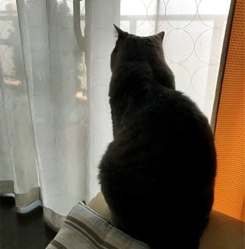 部屋の中からベランダを見つめる猫