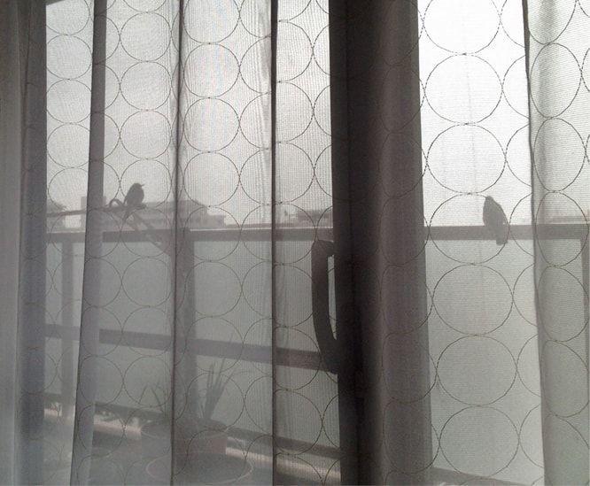 ベランダに雀が二匹遊びに来ている