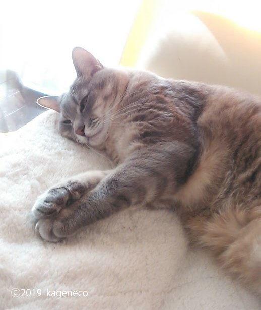 白いソファの上でウトウトする猫