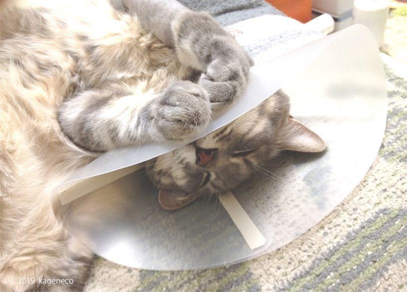 エリザベスカラーを付けて眠る猫