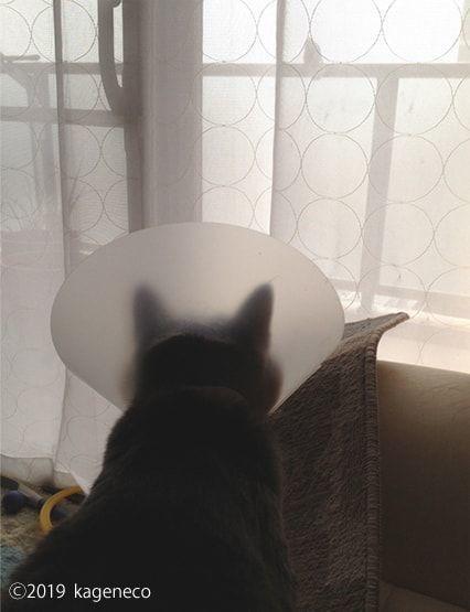 エリザベスカラーを付けながらベランダの鳥を眺める猫